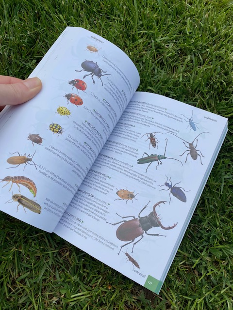 livre insectes en normandie Mme Green