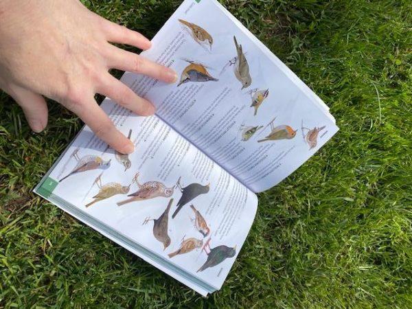 Livre oiseaux en normandie Mme Green